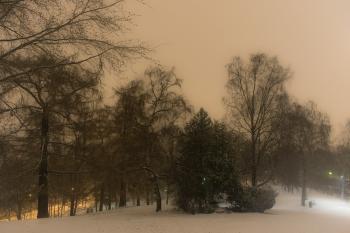 Trees at StHanshaugen Oslo-1350