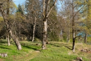 Early spring trees at Bogstad Oslo 5664