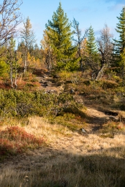 Path at Hallingdal mountainside-9551