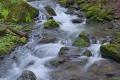 Spring Creek Oslo 5840