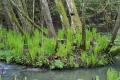Spring ferns Oslo 5797